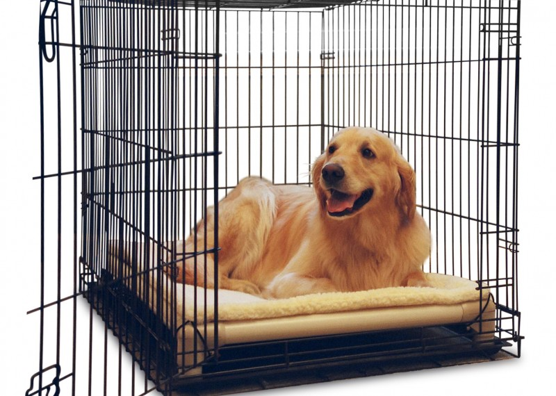 Best available dog crates